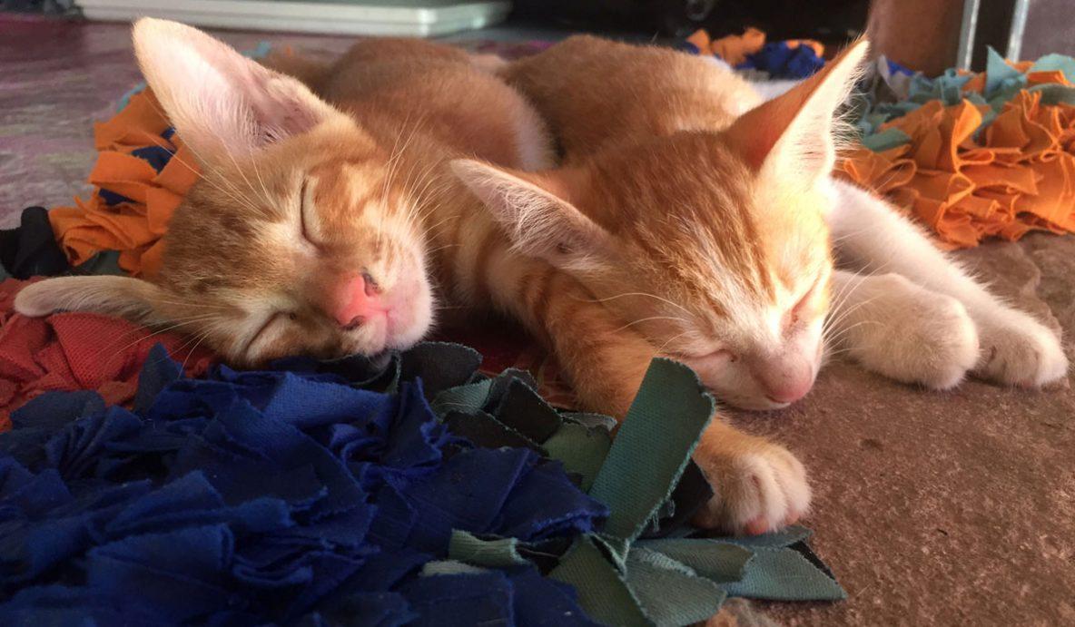 twee slapende kittens